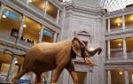 Виртуальная экскурсия по музеям Вашингтона