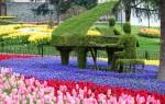 Обзор парка Эмирган и фестиваля тюльпанов в Стамбуле