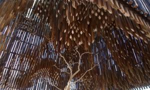Описание Дерева Знаний в Австралии