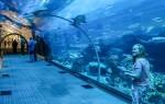 Обзор аквариума-океанариума в Дубай Молле