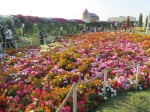 Ароматический сад