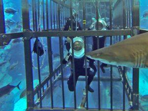 Погружение в клетку с акулами