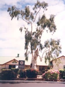Древо в 1996 году