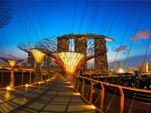 Мост соединяющий деревья