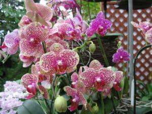 Singapore Botanic gardens занимает площадь 82 га