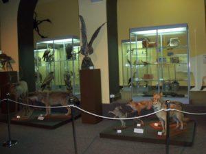 Музей эволюции