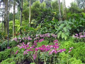 В западной части Botanic gardens разбит The National orchid garden