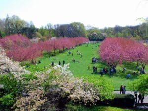 Весна в Бруклинском Ботаническом саду