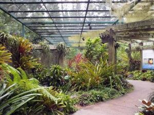 Сад бромелиевых