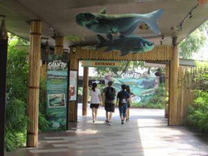 Речное сафари в океанариуме