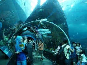 Океанариум «Морская жизнь»