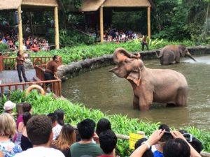 Слоны на работе и игре