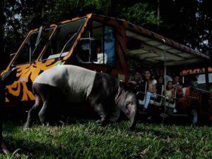 Багги тур по ночному зоопарку