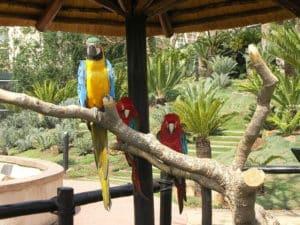 Monte casino bird park