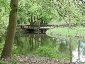 Амстердамский лес