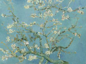 Цветущие ветки миндаля