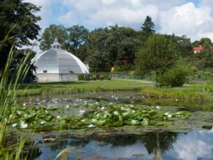 Ботанический сад Бергиуса